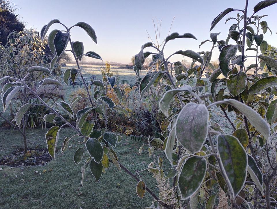 frosty-appletree-jan-17-website-photo